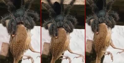 spider_bird_viral-1600686184.jpg